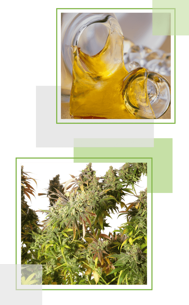 Buy medical marijuana online Canada | My Pure Cannabis