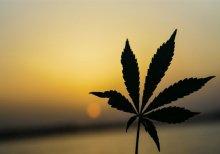 How Does Medical Marijuana Stimulate Appetite?